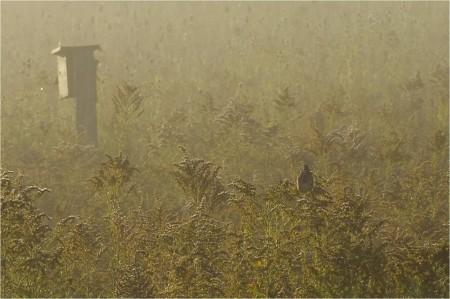 Birds, Trees, & Nests Walk