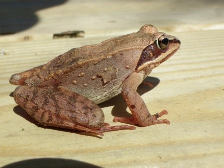Salamander & Frog Fest