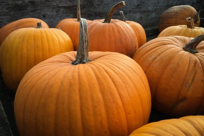 primary-Pumpkin-Carving-1472588246