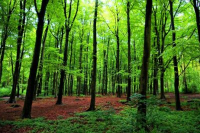 What can we learn from trees to regenerate Akron?