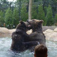 Akron Zoo Member's Night