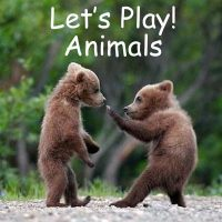 playing-animals-38