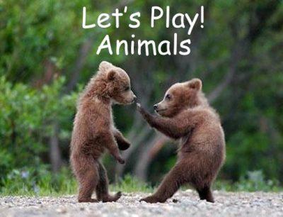 playing-animals-38