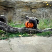 Animal Enrichment Day: Pumpkin Palooza