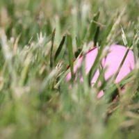 Easter in Kenmore