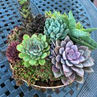 Succulent and Cacti Bowl Workshop with Wine