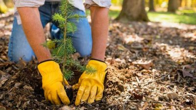 Legacy of Trees: Planting Trees in Memory or Celebration
