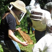 Gardening Gurus: Is Beekeeping For You?
