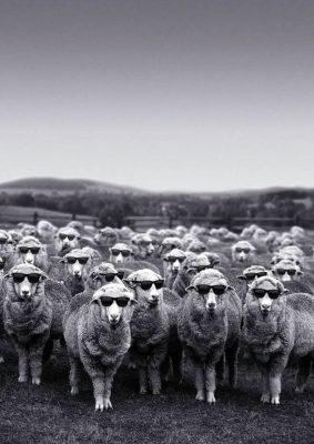 Pulling the Wool Over Their Eyes