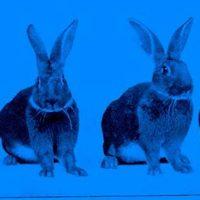 Real Dom/Cheap Fantasy/Half An Animal/NRML GRL