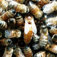 The Hives at Hale Farm: Is Beekeeping for You?