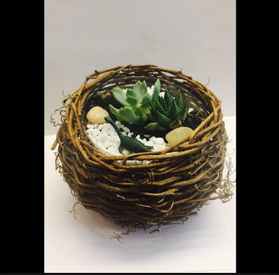 Dinosaur Nest Terrarium