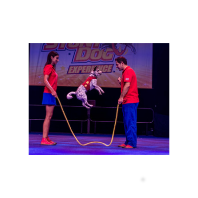 Chris Perondis Stunt Dog Experience - ONSALE 9/29
