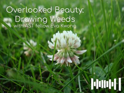 Overlooked Beauty: Drawing Weeds