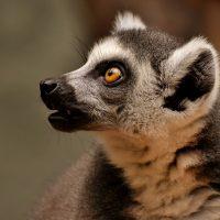 Akron Zoo - Community Days