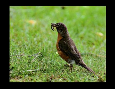 Seminar - Identifying Birds by Call