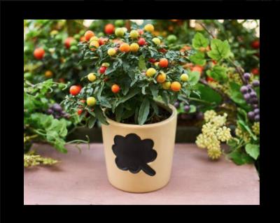 Seminar - Miniature Vegetables for Your Garden