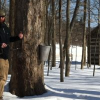 Maple Sugar Festival & Pancake Breakfast