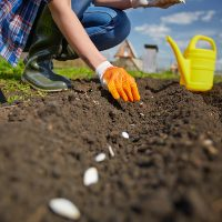 Fifth Annual Let's Get Growing! Community Garden Workshop & Expo