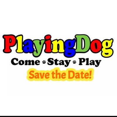 PlayingDog; Come Stay PLAY!