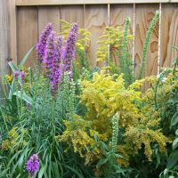 Native Plants Workshop - Gardening with a Purpose