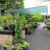 Stan Hywet Plant Sale