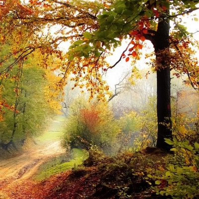 NatureConnect Welcome Autumn: Songs and 'Tails' fr...