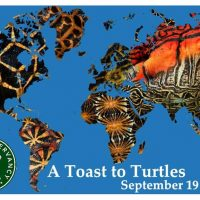 A Toast to Turtles