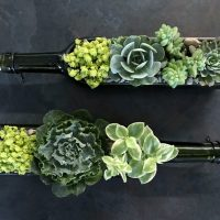 Wine Bottle Succulents