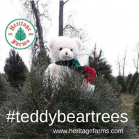 National Great Pyrenees Rescue Teddy Bear Trees fundraiser