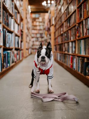 Bow Wow Book Buddies (CANCELED/POSTPONED)