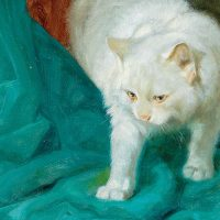 Les Délices: The White Cat