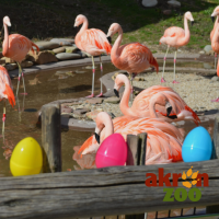Adult Egg Hunt at the Akron Zoo
