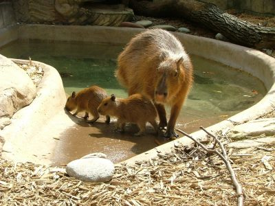 Mothers' Day at the Akron Zoo