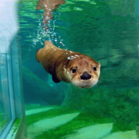 Otterly Amazing WEBINAR