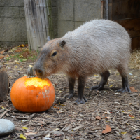 Cancelled - Animal Enrichment Day: Pumpkin Palooza