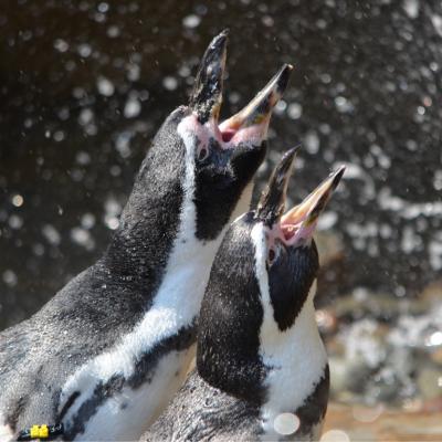Cancelled - Penguin Palooza