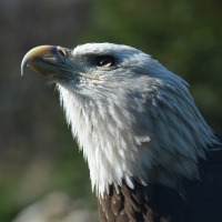 Veterans Appreciation Days at the Akron Zoo