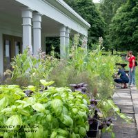 Citizens of Hale Early Bird Plant Sale