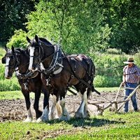 Sow and Grow Farm Festival and Plant Sale