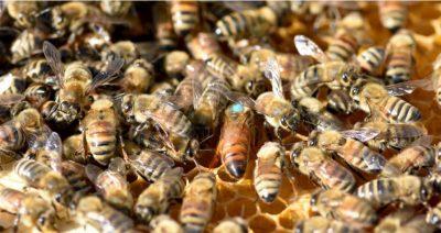 Beginner Beekeeping Class