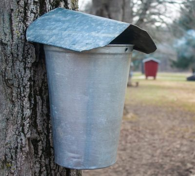 Maple Sugar Days 2021