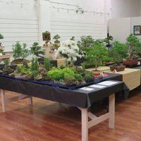 Bonsai Tree Exhibit